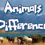 Animal Differences